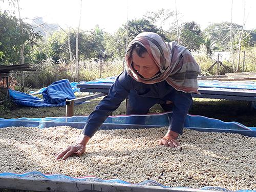 コーヒー豆の季節