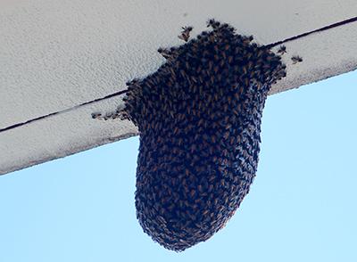 もう少しでハチミツを食べられたのに…