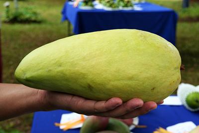 ずっしりサイズのマンゴー