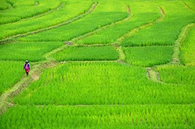 稲作の季節